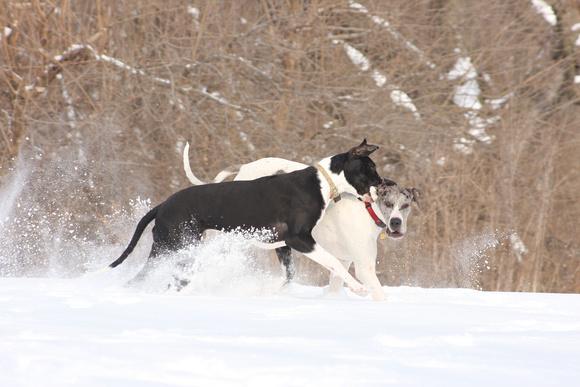 Kizzy getting Greta